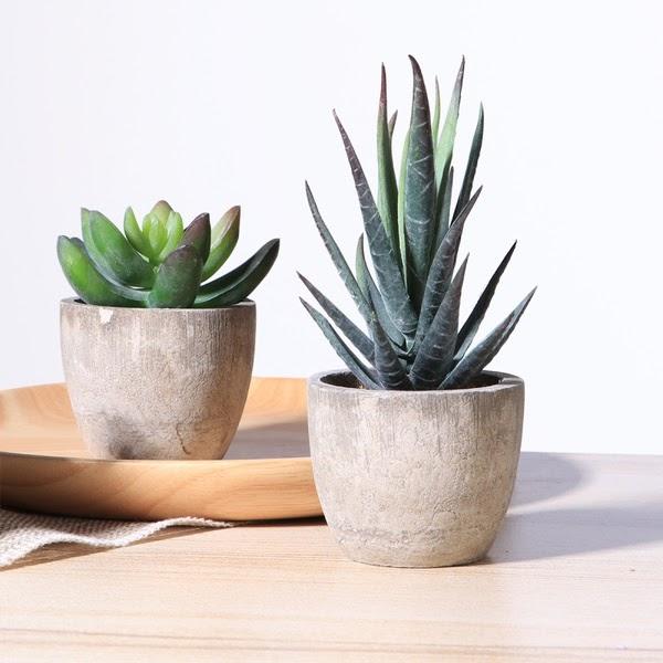 fake succulent plants