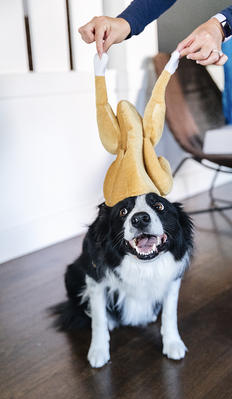 butters-with-turkey-hat