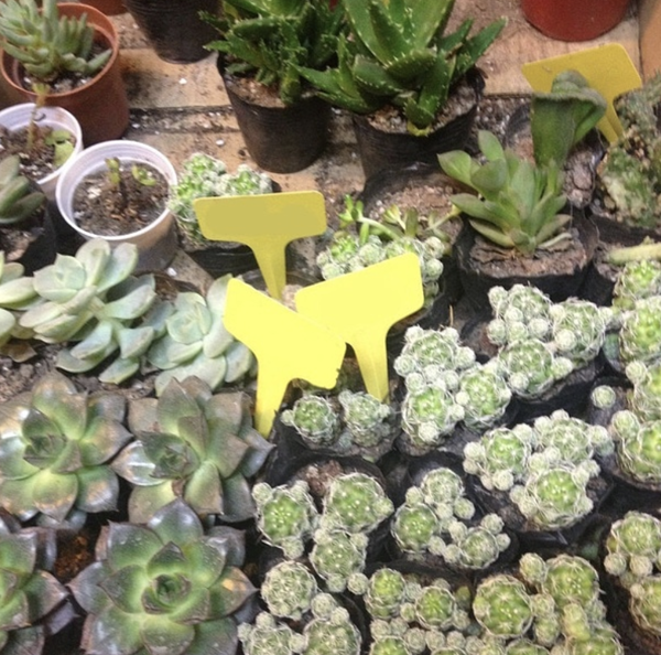 yellow plant labels