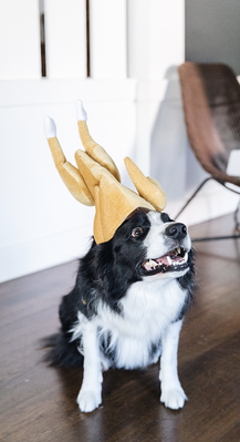 butters-with-a-turkey-hat