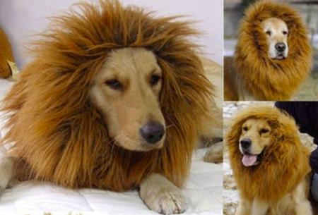 Lion's Mane for Dog