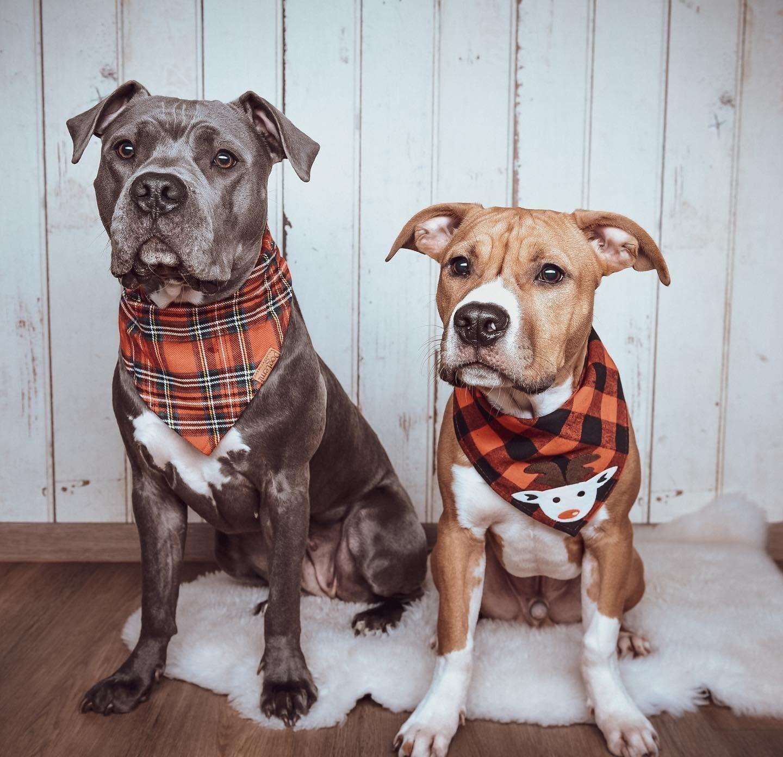 Pet Handkerchief