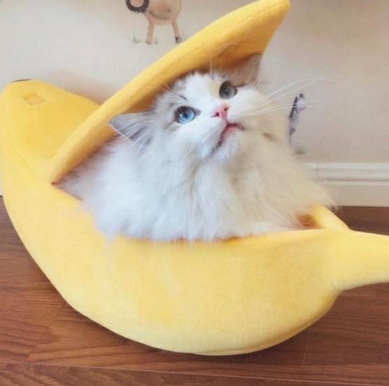 Banana pet bed, weird, winter