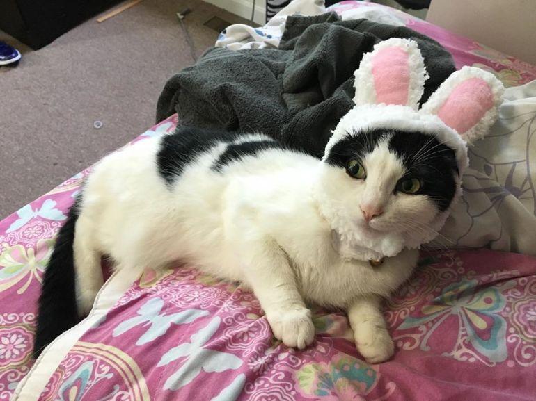 Cat Ear Costume