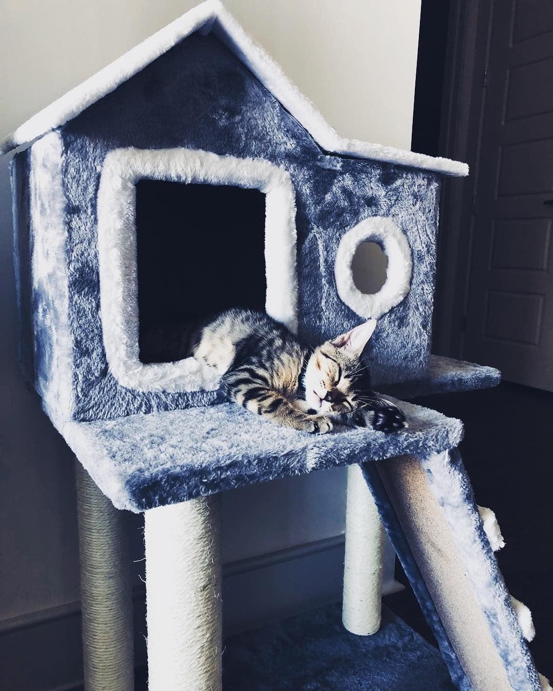 animaux de compagnie, maison pour chat