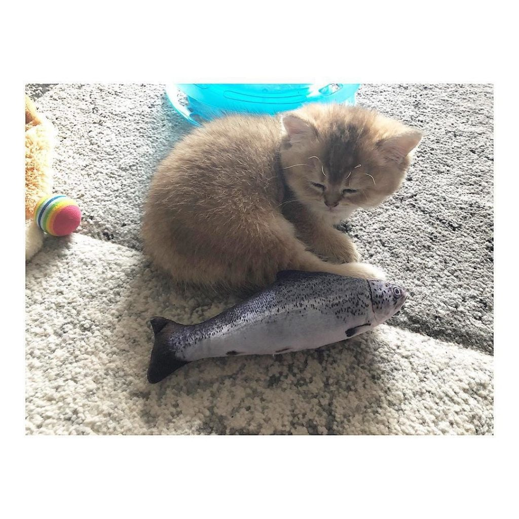 kitten, cat, fish, toy
