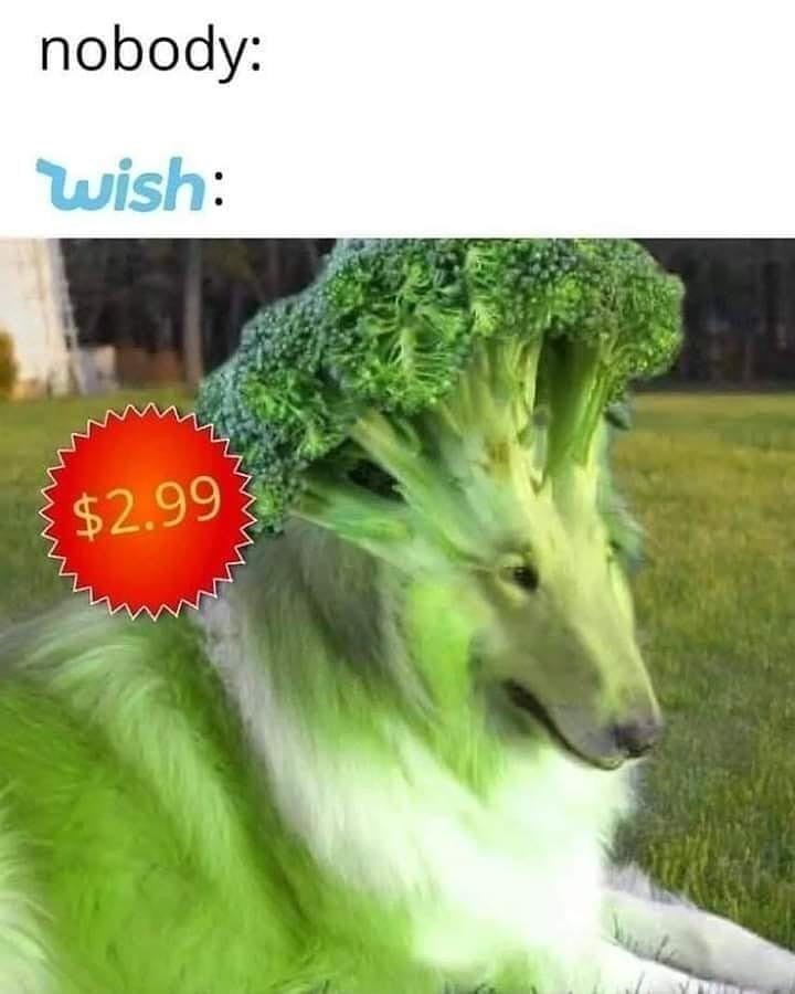 broccoli dog meme