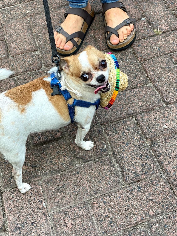 dog hat, wish