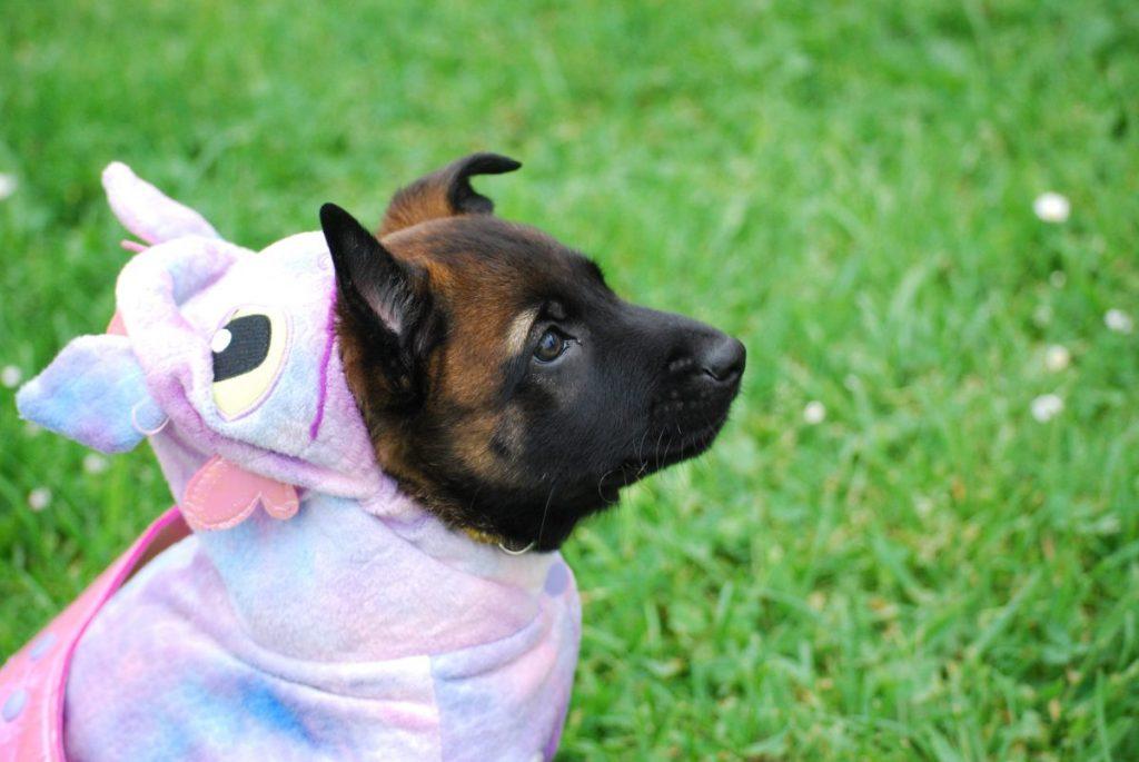dog-in-unicorn-costume