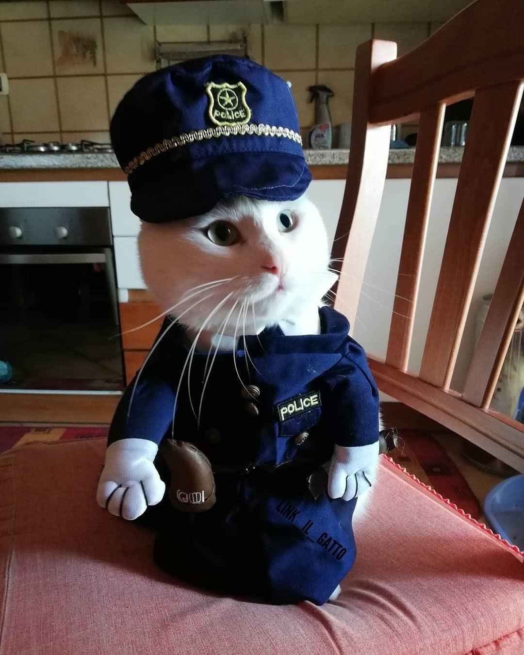 déguisement pour chat