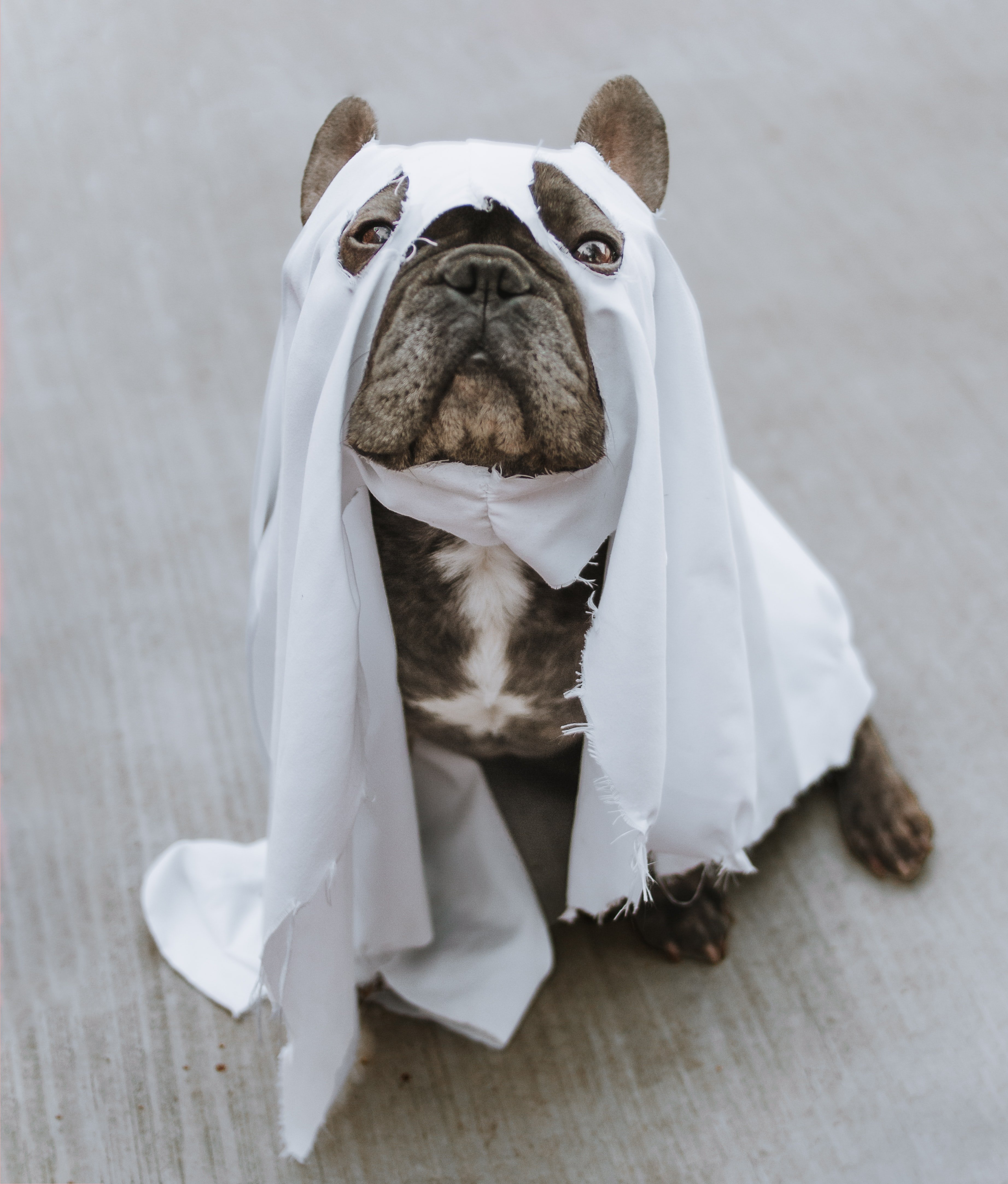 Wish Quiz: What Should Your Pet Be for Halloween?